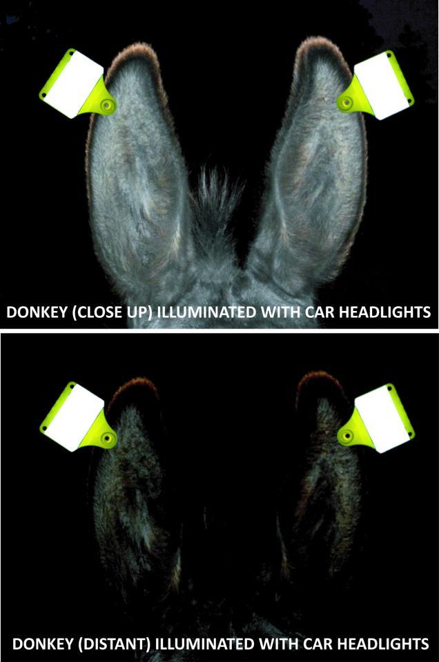 Fluorescerende oormerken