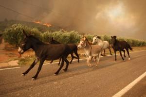 ezels vluchten voor vuurzee